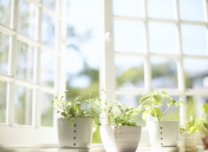 Plants in a Window --- Image by © Royalty-Free/Corbis